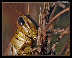 Grasshopper 08 by boron