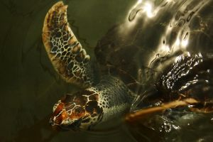 Turtle close-up by wildplaces