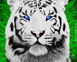 white tiger by Miracat