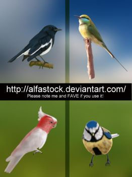 Painted Birds Pack by alfastock