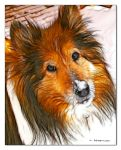 For Colliemom by KLR620