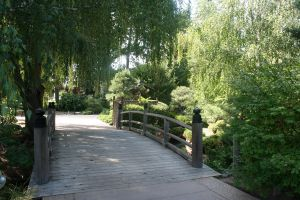 Denver Botanical 25 by Falln-Stock