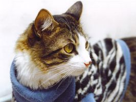 Bogoso my cat by Candy27