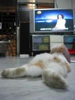 The Bunny who watches TV by Asaciel