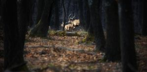 Red deer running through the woods by MoonKey19