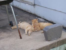 Kittenses 11 by Empy-Stock