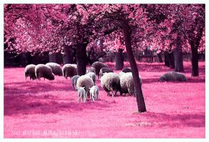 Sheep by werol