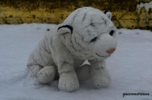 Sally The White Tiger Enjoying The Snow by queenmariann