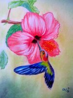 Hummingbird and Hibiscus by SoapyFresh