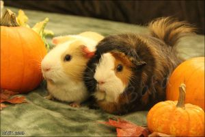 Pumpkin Pals by Bafa