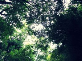 trees before sky by Fluessiges-Feuer