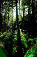 Trees and Ferns by TheDevlyn