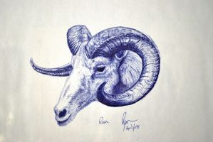 Big Horned Sheep by darkguitar3000