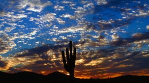 Cactus Sunset - Saguaro by Delusionist