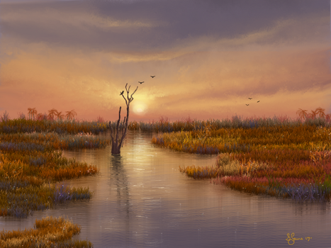 Wetlands (Florida) by Sillybilly60