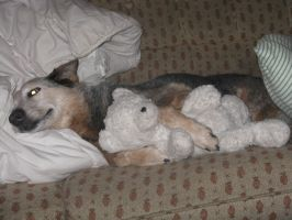 My Dog with her bear by Gothen101