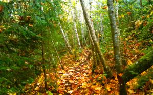 Autumn Trail by CBDave