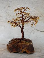 Autumn Gold Bonsai by Lady-Blue