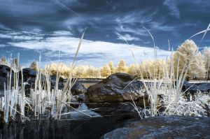 Infrared Reeds by Wallcrawler62