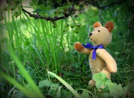 Teddy by Uncle-Sarah