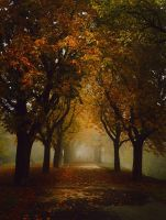 another foggy day by PinkaPhotography