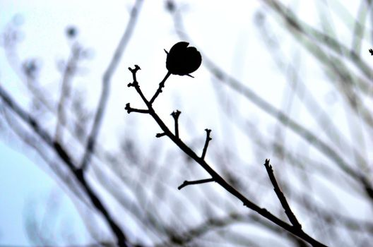 A single branch in the wind by MythInABottle