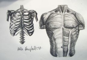 Torso Study by KelHemp