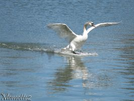 The landing of the swan by Momotte2