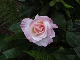 Pale Pink by SquishyPandaPower