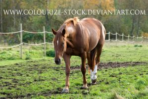 Standardbred 1 by Colourize-Stock