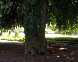 Under the big shade tree of Untermeyer Park by Bizee1