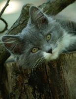 relaxed kitten by Malmborg