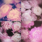 stock photopack 001# - flowers by itskrystalized