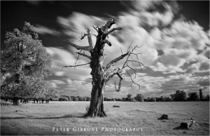 Old Tree 2 by Photo-Joker