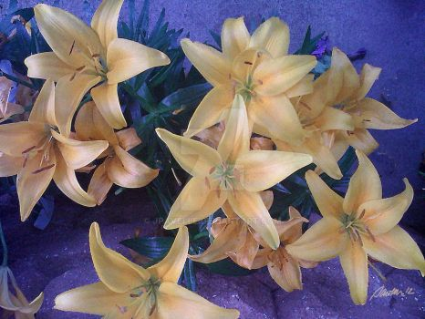 Golden Lilies by Jpavelle