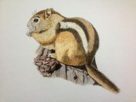 Chipmunk portrait drawing by Ned-The-Hat