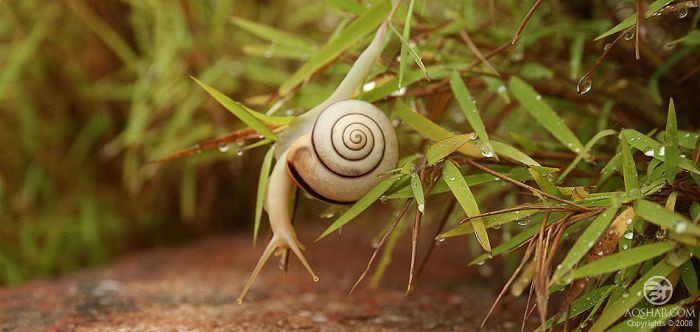 travel of a snail 002 by Bheeshoom