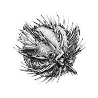 Blowfish by butterfrog