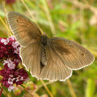 Another Brown Butterfly by Bhesi