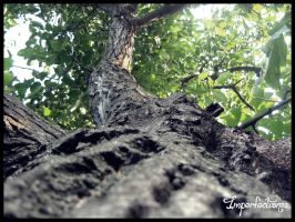 Up, in the tree by Imperfection22
