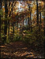 Crowders Mountain 20D0050964 by Cristian-M