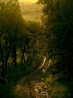 Path by thestupidkid