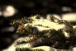 Needles and Snow by exarobibliologist