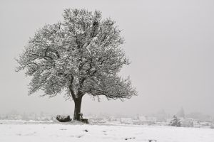 winter tree by RitterRunkel