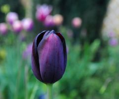 Perfect Plum 2 by Forestina-Fotos