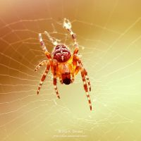 Spidergirl by Viliggoly