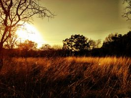Field Sunset by TheGerm84