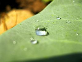 Leaf droplets - Earth Tone by OneofakindKnight