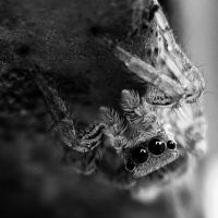 Jumping Spider 4 by Youcef07