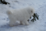 Inuk Playing by SuliannH